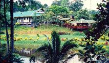 Sepilok Jungle Resort - hotel Sandakan