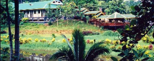 Sepilok Jungle Resort Hotel in Sandakan, Sabah, Cheap Hotel